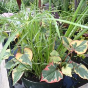 Variety Pot 2